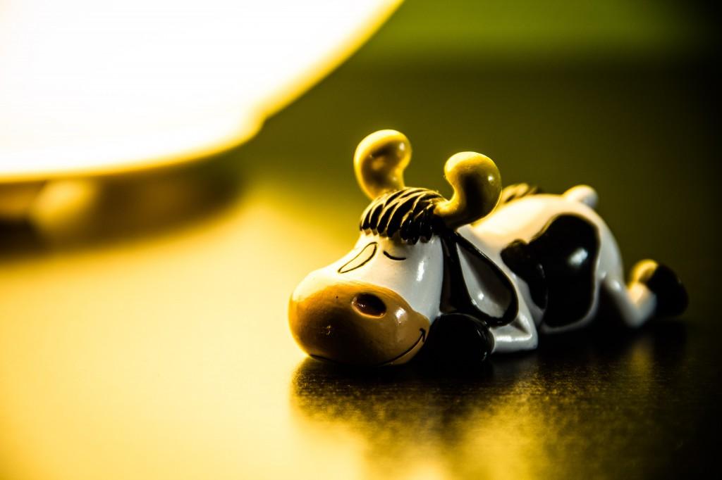 Hector-The Cow aime ne rien faire et juste bronzer